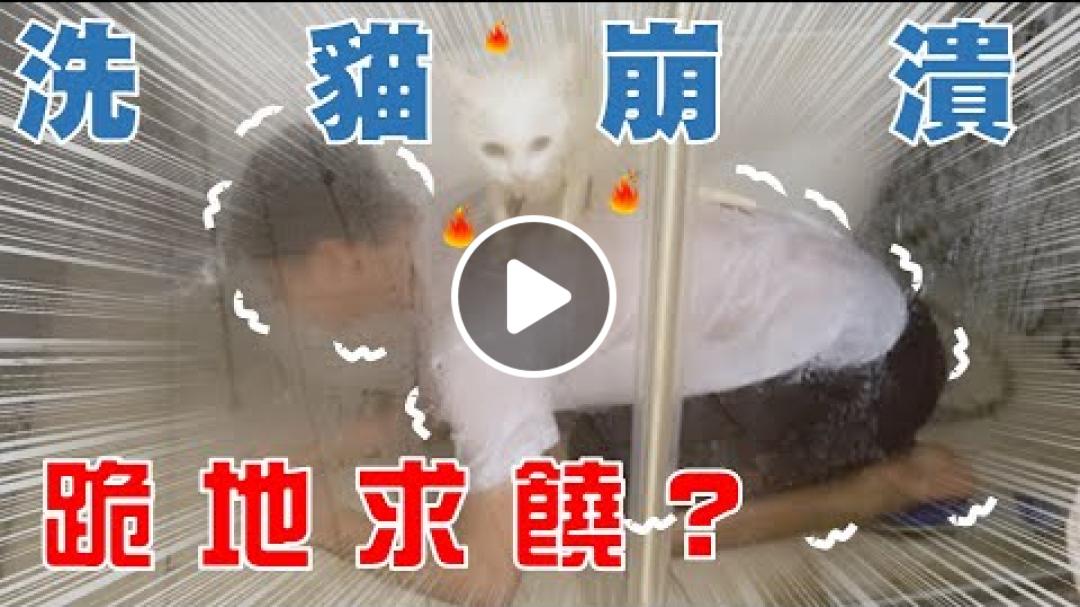 【豆漿 - SoybeanMilk】洗兩隻貓 史上最荒謬洗貓!